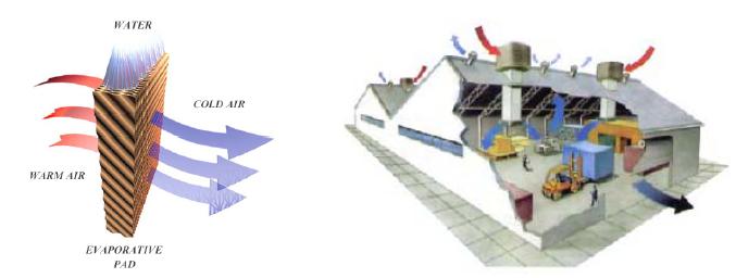 Racitor evaporativ COLD AIR